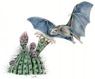 Bat Cactus