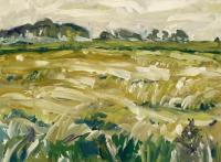 Ripe cornfield