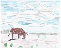 cow sketch