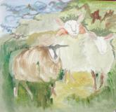 latest sheep scene