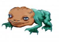Pink Headed Numfrog