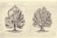 Tree sketches