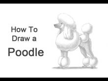 Embedded thumbnail for How to Draw a Dog (Poodle)
