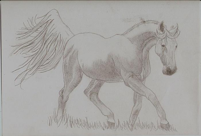 Arab Horse Sketch Nature Drawings Pictures Drawings