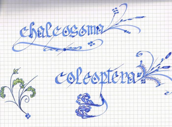Calligraphy practice types drawings pictures