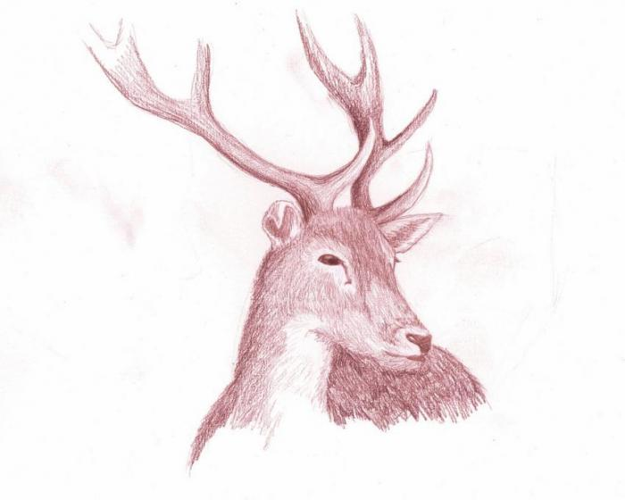 Deer Nature Drawings Pictures Drawings Ideas For Kids