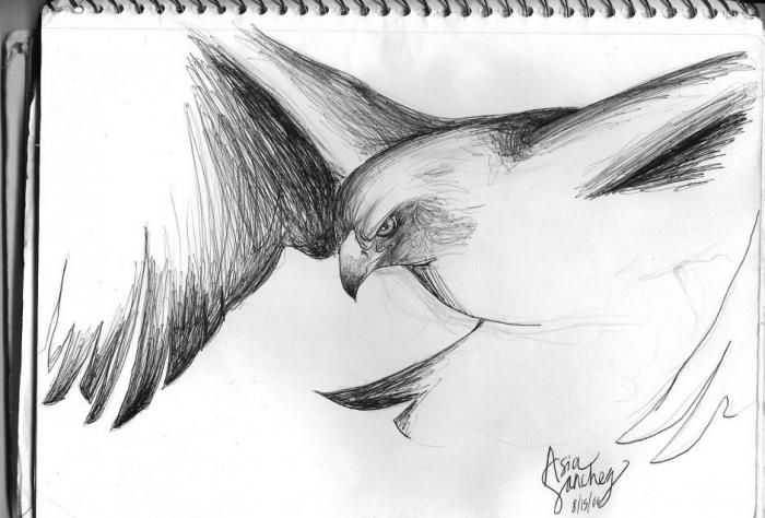 Golden eagle nature drawings pictures drawings ideas for Ideas for easy drawings