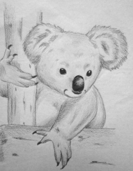 Koala nature drawings pictures drawings ideas for kids for How to draw nature drawing