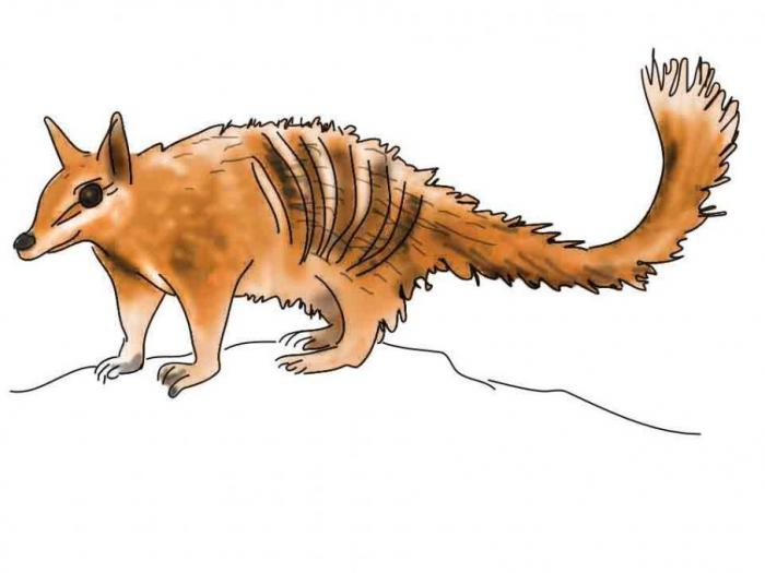 Numbat. Engineering drawing. Drawings. Pictures. Drawings ideas for kids. Easy and simple.