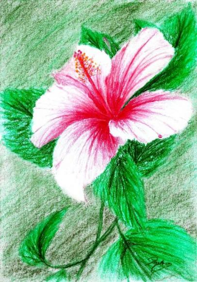 pink hibiscus. Flowers. Drawings. Pictures. Drawings ideas ...