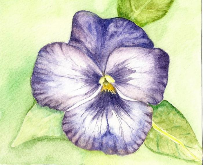 pansy flower drawing - photo #6