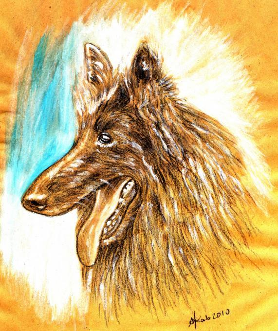 German Shepherd Animals Drawings Pictures Drawings Ideas For