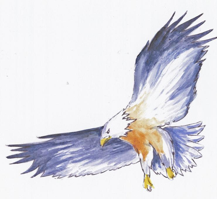 Pen and ink drawing of an eagle nature drawings for Ink drawings easy