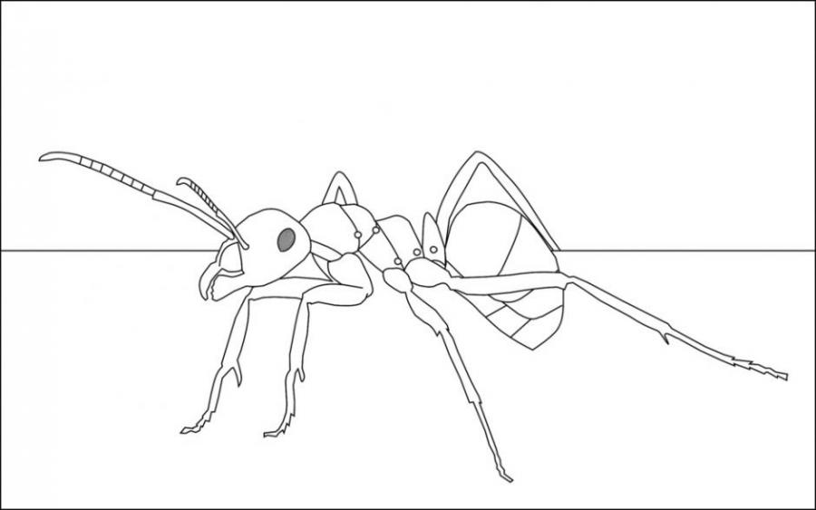 Ant Animals Drawings Pictures Drawings Ideas For Kids Easy And