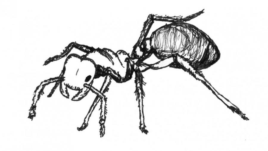 Ant Drawing Animals Drawings Pictures Drawings Ideas For Kids