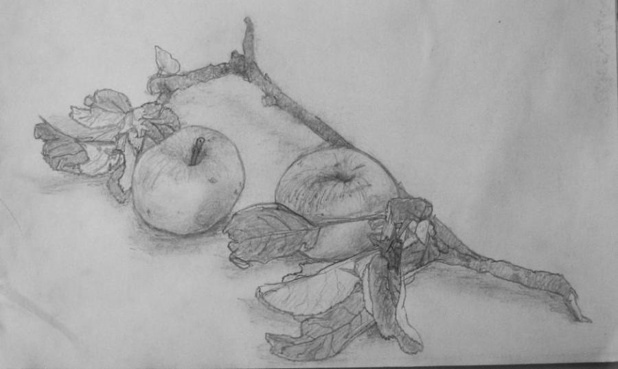 Apples And Twig Pencil Sketch Nature Drawings Pictures Drawings