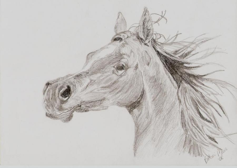 arabian horse head nature drawings pictures drawings