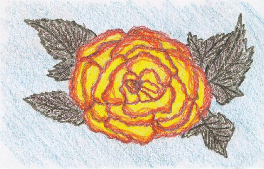 Begonia Flowers Drawings Pictures Drawings Ideas For