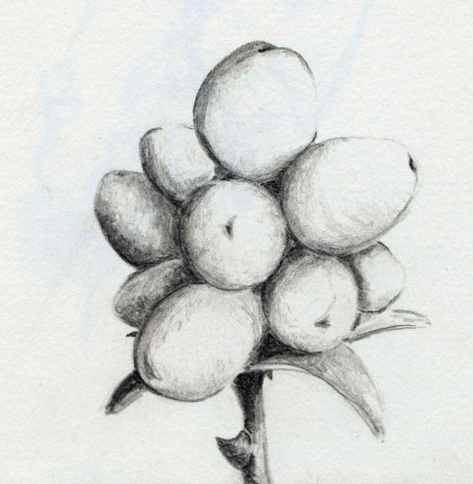Berry Nature Drawings Pictures Drawings Ideas For Kids Easy And
