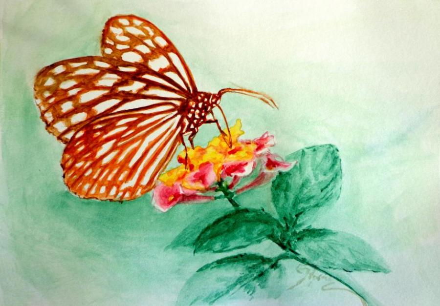 Butterfly On Flower Nature Drawings Pictures Drawings Ideas For