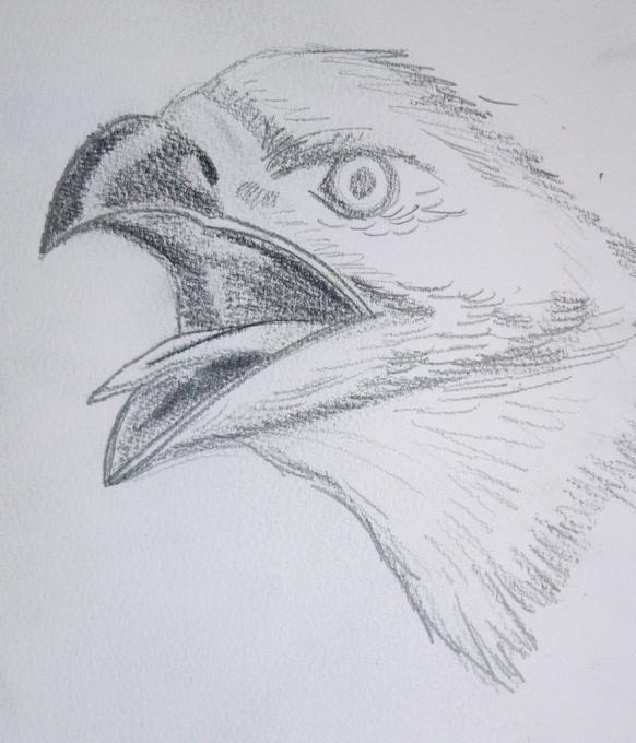 Eagle. Nature. Drawings. Pictures. Drawings ideas for kids ...