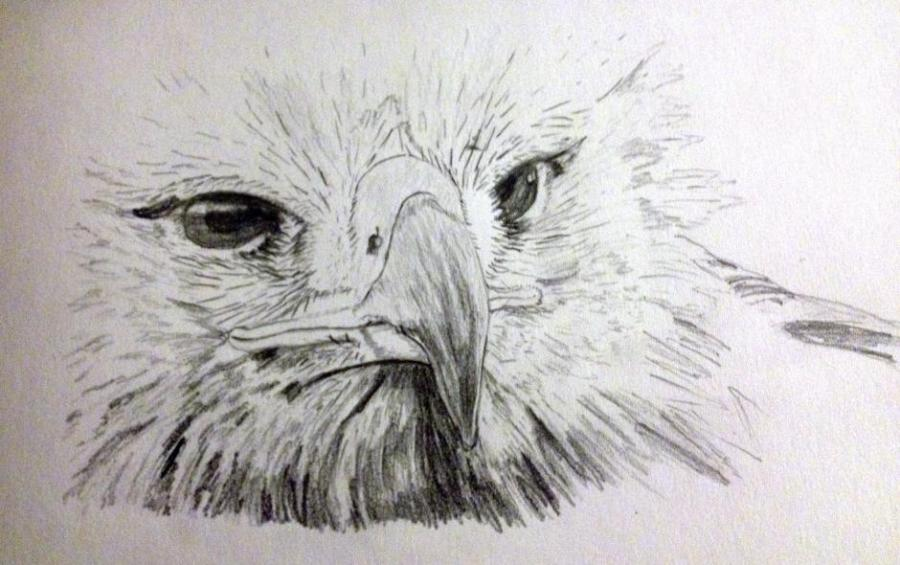 Eagle. Nature. Drawings. Pictures. Drawings ideas for kids. Easy and ...