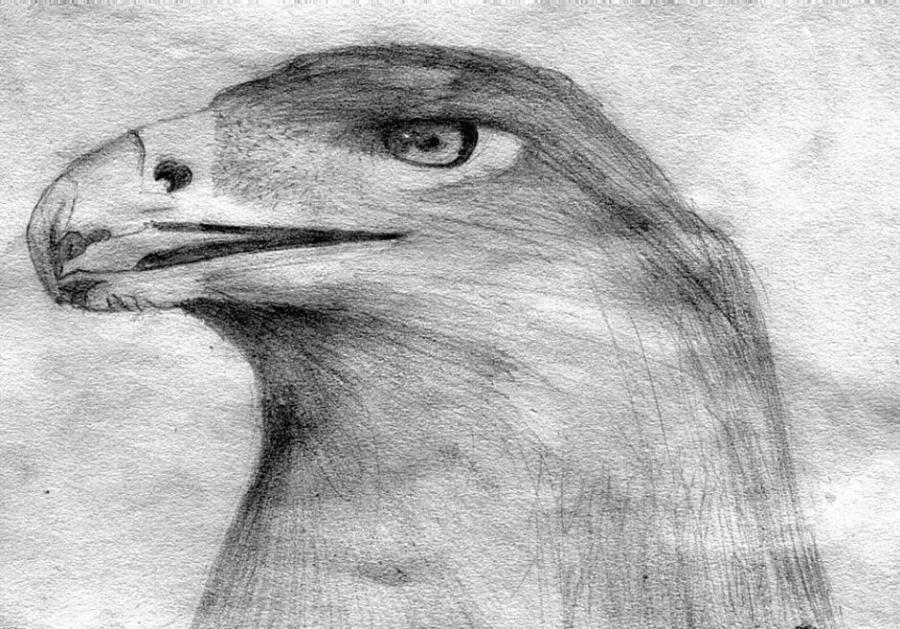 Eagle drawing. Nature. Drawings. Pictures. Drawings ideas for kids ...