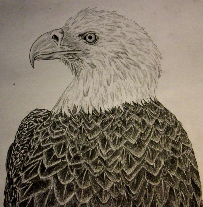 eagle head. Birds. Drawings. Pictures. Drawings ideas for kids. Easy ...