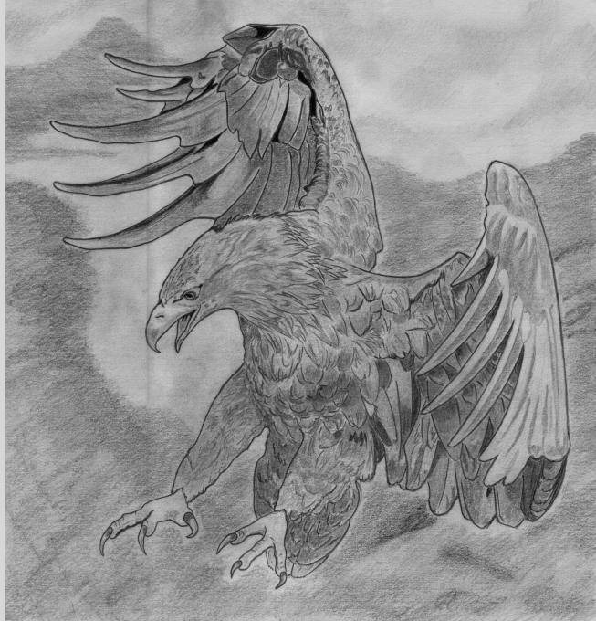 Eagle Sketch Nature Drawings Pictures Drawings Ideas For