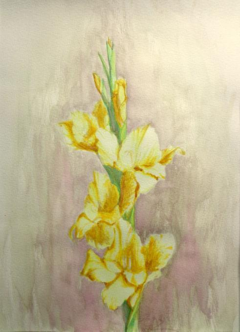 Gladiolus Flowers Drawings Pictures Drawings Ideas For Kids