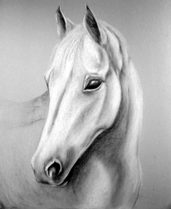 Horse Head Animals Drawings Pictures Drawings Ideas For Kids
