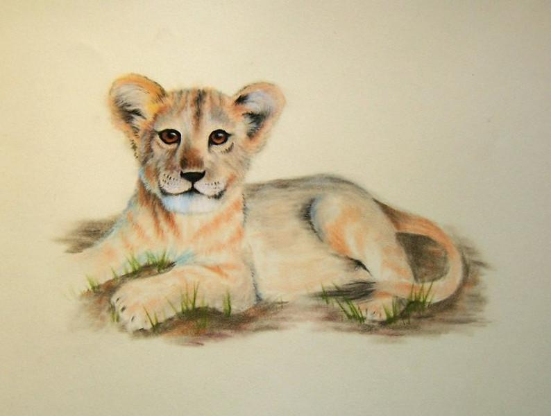 Lion Cub Animals Drawings Pictures Drawings Ideas For Kids Easy