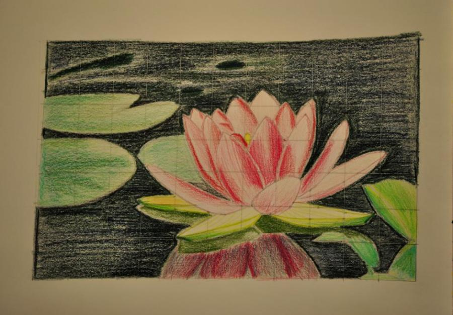 Flower Lotus Flower Drawing Images Easy