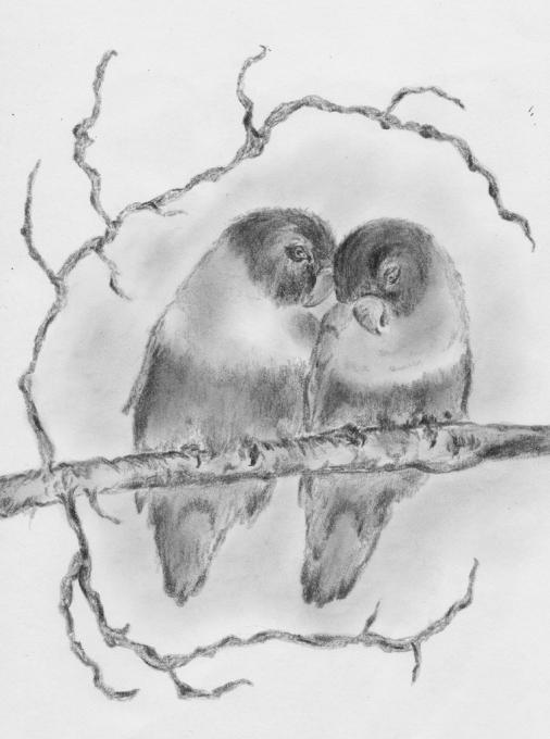 Lovebirds Birds Drawings Pictures Drawings Ideas For Kids Easy And Simple