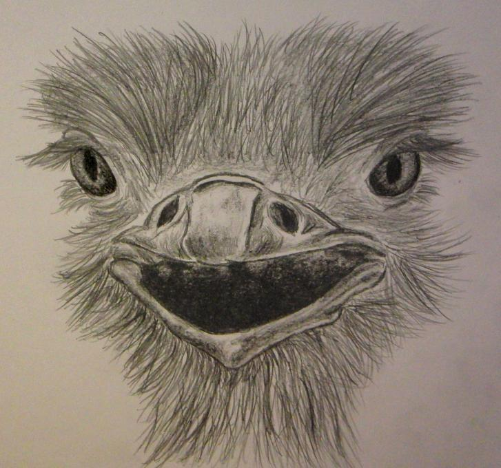 Ostrich Birds Drawings Pictures Drawings Ideas For Kids Easy