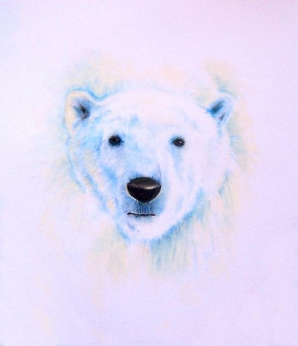 Polar Bear Nature Drawings Pictures Drawings Ideas For