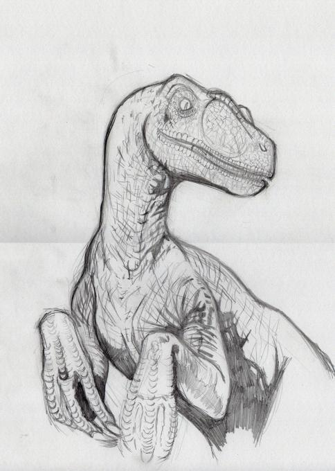 Raptor Nature Drawings Pictures Drawings Ideas For