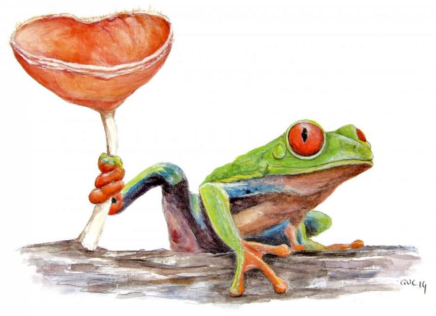 Red Eyed Tree Frog Fungi Animals Drawings Pictures