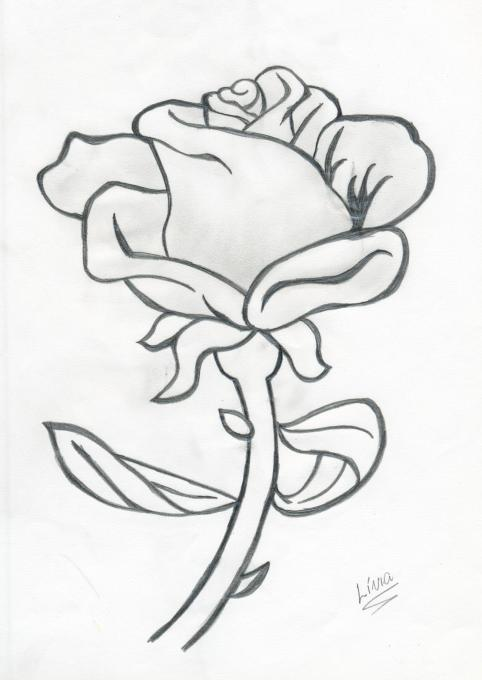 Rosa Flowers Drawings Pictures Drawings Ideas For Kids Easy And