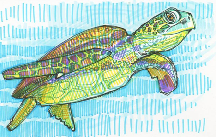 Sea Turtle Drawing Nature Drawings Pictures Drawings Ideas For