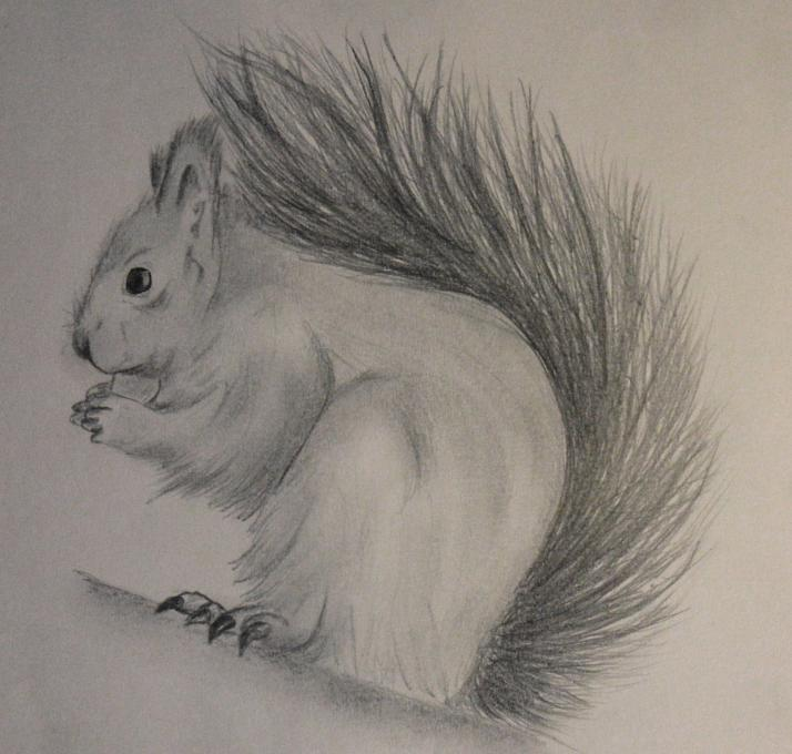 Squirrel Animals Drawings Pictures Drawings Ideas For Kids Easy