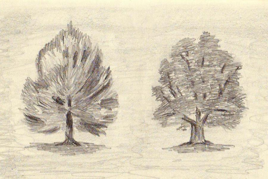 Tree Sketches Nature Drawings Pictures Drawings Ideas