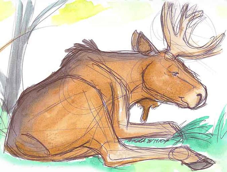 Bull Moose Nature Drawings Pictures Drawings Ideas For