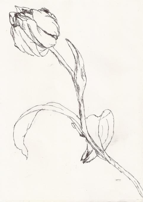 a tulip sketch flowers drawings pictures drawings ideas for kids