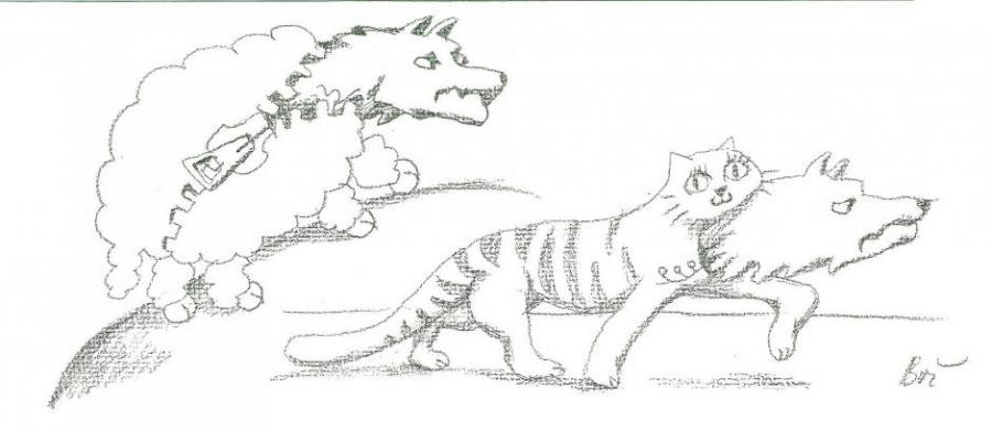 Wolf And Kitten Nature Drawings Pictures Drawings Ideas For Kids
