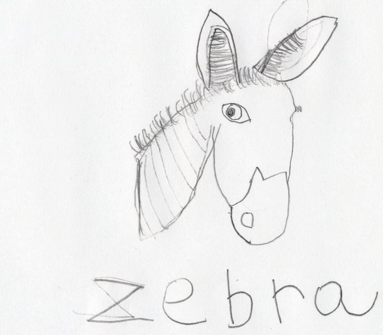Zebra Nature Drawings Pictures Ideas For Kids Easy