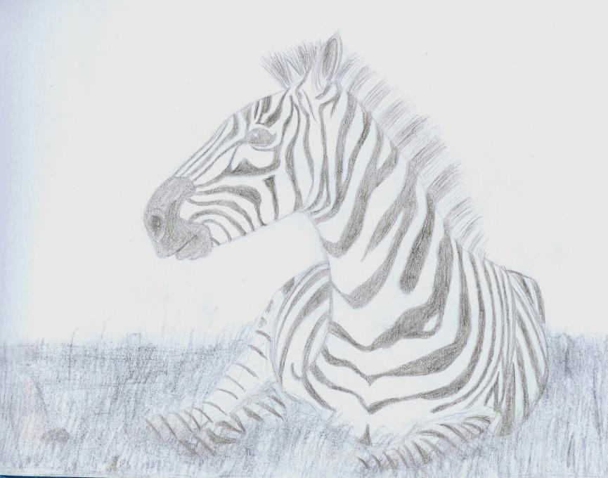 Zebra Nature Drawings Pictures Drawings Ideas For Kids Easy And