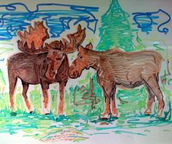 moose drawing
