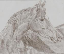 Arabian drawing - Texas