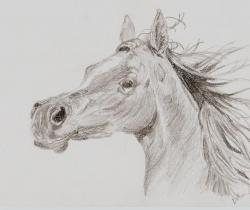 Arabian Horse Head